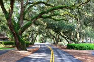 Beautiful moss covered oaks in Hilton Head.